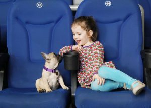 Dog-friendly screening VMDIFF